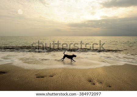 Dog beach is a black dog running along the sandy beach with a bright cloudy sky in the background.