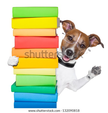 dog behind a tall stack of books - stock photo