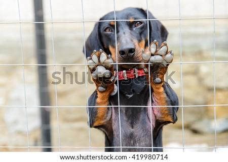 Dog behind girds - stock photo