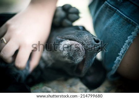Dog being petted by young woman
