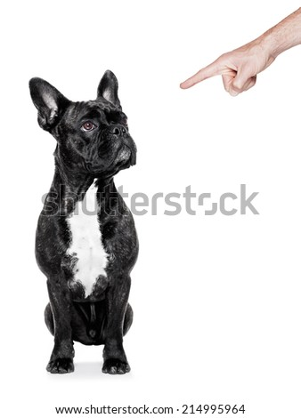 dog being punished by his owner with finger  pointing out him, isolated on white background - stock photo