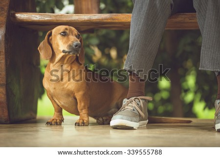 Dog beneath the wooden bench, making company to its owner. - stock photo