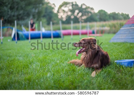 dog beside bowl of water waiting to race in agility