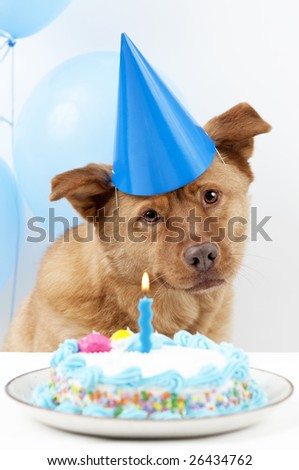Dog Birthday party with cake and balloons - stock photo