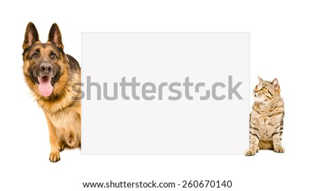 Dog breed German Shepherd and cat Scottish Straight sitting behind poster isolated on white background - stock photo
