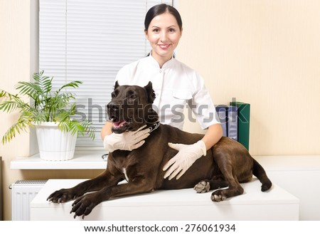 Dog breed Staffordshire Terrier at the vet - stock photo