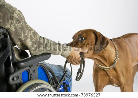 Dog bringing lead - stock photo