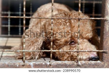 Dog cage - stock photo