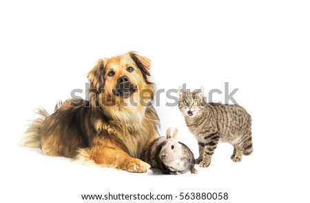 Dog, cat and bunny in studio with white background