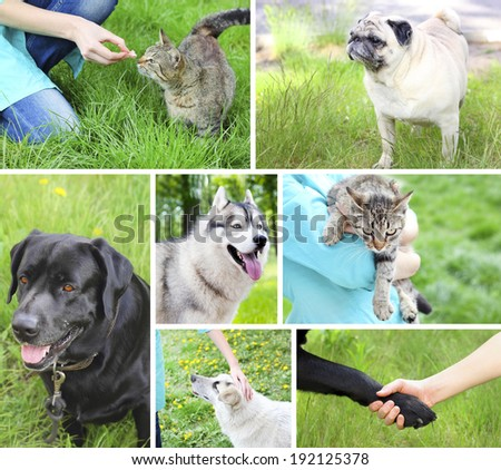 dog cat friendship man - stock photo