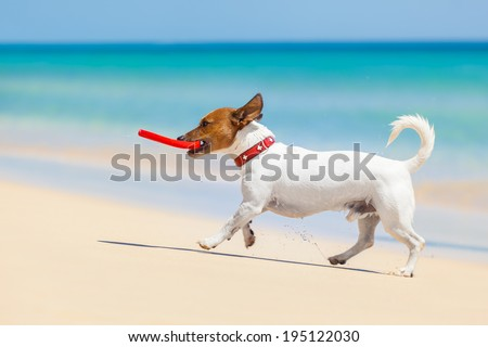 dog catching a red  flying disc and running at the beach - stock photo
