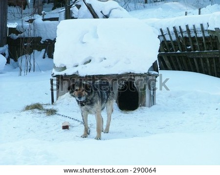 Dog chained to a doghouse (Siberia)