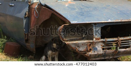 dog chained to a rusty car