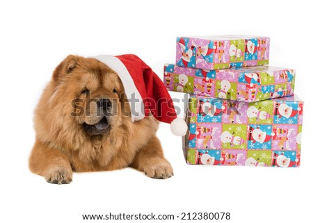 dog chow chow with a christmas decoration, on white - stock photo