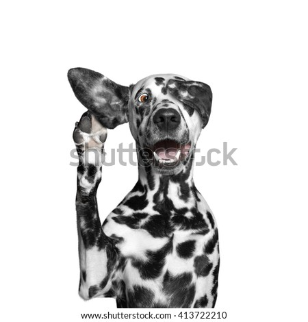 dog close his eye and listens attentively to his owner - stock photo