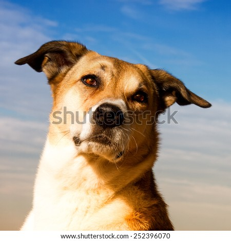 dog close-up against blue sky - stock photo