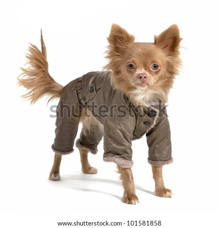 Dog clothes isolated on white - stock photo