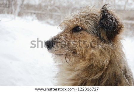 dog covered snow
