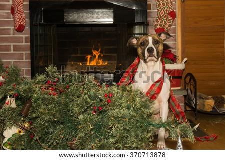 Dog Destroys Christmas - stock photo