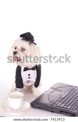 Dog doing business with coffee - stock photo