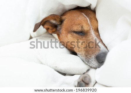 dog dreaming of better times  in life - stock photo