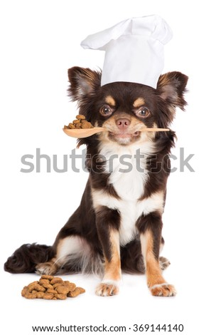 dog dressed as a cook tasting food - stock photo
