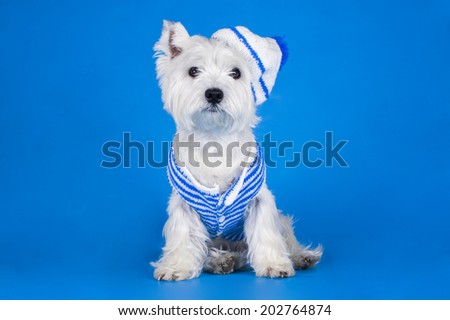 dog dressed as a sailor - stock photo