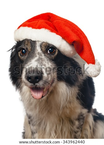 dog dressed in Santa claus hat - stock photo