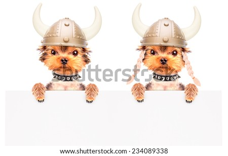 dog dressed up as a viking and holding white paper banner - stock photo
