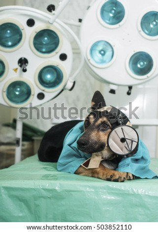 Dog dressed up as as a vet