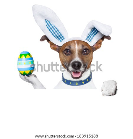 dog dressed up as bunny with easter holding an colorful easter egg