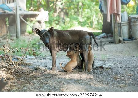 Dog eat breastfeeding - stock photo