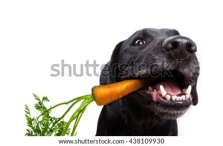 Dog eating healthy