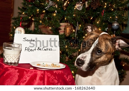 Dog eats Santa's cookies. - stock photo