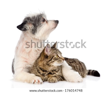 dog embracing cat and looking away. isolated on white background - stock photo