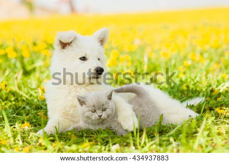 Dog embracing cat on a dandelion field.