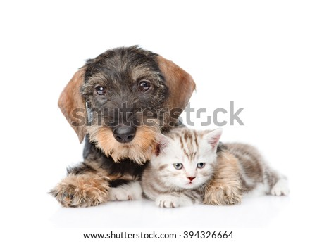Dog embracing tiny kitten. isolated on white background - stock photo