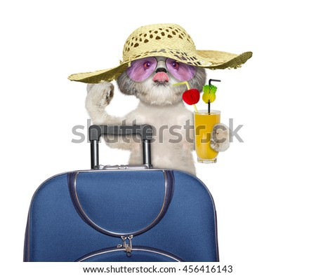 dog enjoys travel and summer holiday-- isolated on white