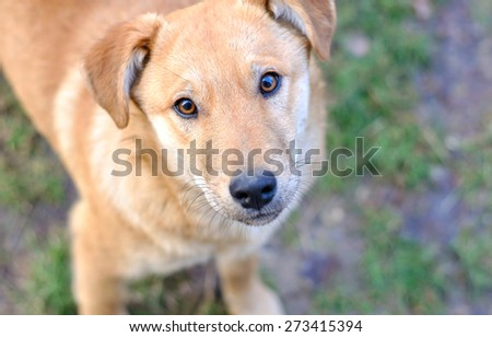 dog eyes - stock photo