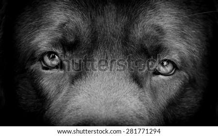 DOG, eyes expression - stock photo