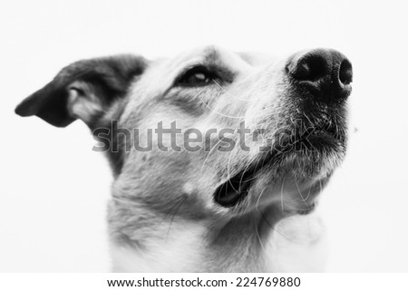 dog face  portrait - stock photo