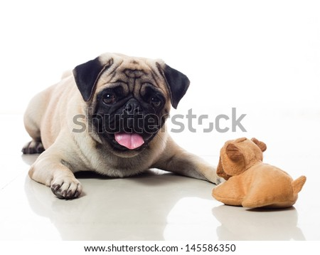 Dog facing stuffed toy cute and funny  - stock photo