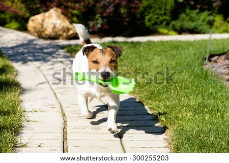 Dog fetching a scoop