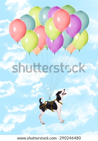 Dog flying in the sky with balloons - stock photo