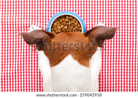 dog food bowl on tablecloth,paws and head of a dog - stock photo