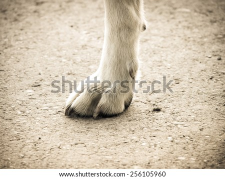 dog foot  - stock photo