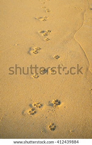 dog footprints on the beach - stock photo