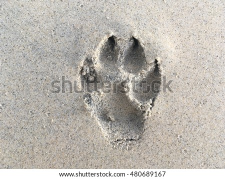 Dog foots pant on sand