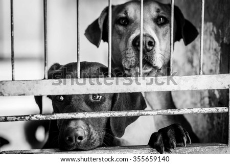 Dog from the shelter. - stock photo