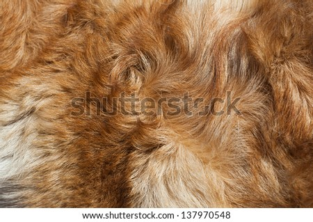Dog fur close-up. red, yellow, gray, white color. - stock photo